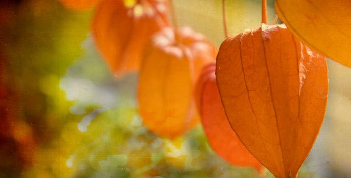 Herbstschoenheiten