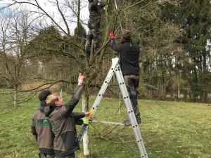 Obstbaumschnitt-Reiffenschneider