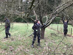 Obstbaumschnitt-Reiffenschneider-Apfelbaum